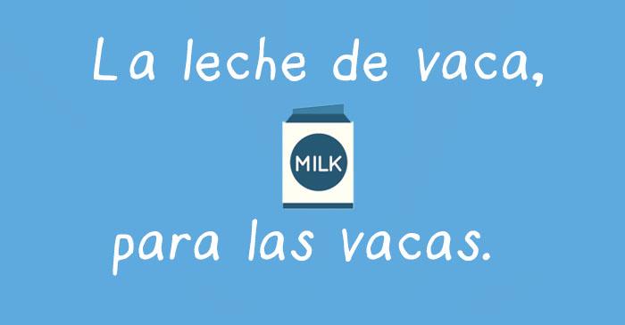 leche de vaca mala