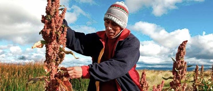 la quinoa es paleo