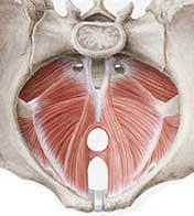 incontinencia suelo pelvico crossfit
